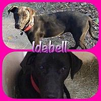 Adopt A Pet :: Idabel - Ravenna, TX
