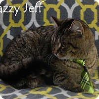 Adopt A Pet :: Jazzy Jeff - Bucyrus, OH