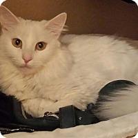 Adopt A Pet :: Lily Grace - Las Vegas, NV