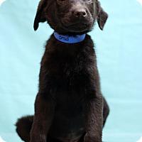 Adopt A Pet :: Brod - Waldorf, MD