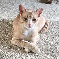 Adopt A Pet :: Charlie - Troy, MI