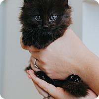 Adopt A Pet :: Duchess $75 - Seneca, SC
