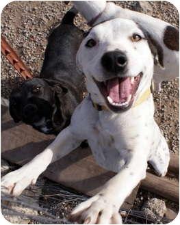 Beagle/Hound (Unknown Type) Mix Dog for adoption in Glenpool, Oklahoma - Casper