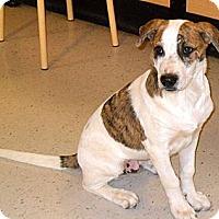 Adopt A Pet :: Mr. C - Phoenix, AZ