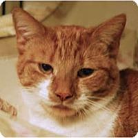 Adopt A Pet :: Mrs.Quinn - Lunenburg, MA