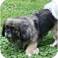 Adopt A Pet :: Dinah - Virginia Beach, VA