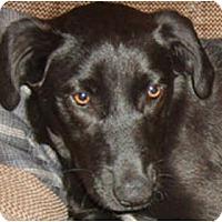 Adopt A Pet :: MISTY - Essex Junction, VT