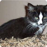 Adopt A Pet :: Skunky - Westfield, MA