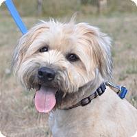 Adopt A Pet :: Oso - Tumwater, WA