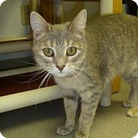 Adopt A Pet :: Grendal - Hamburg, NY