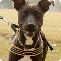 Adopt A Pet :: Talia - Greenwood, SC