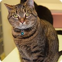 Adopt A Pet :: Brianna - Pottsville, PA