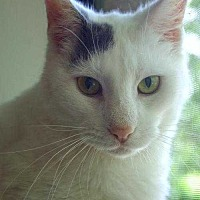 Adopt A Pet :: Harvey Milk - East Brunswick, NJ