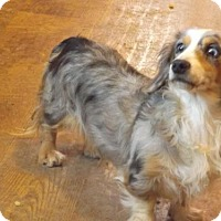 Adopt A Pet :: Skylar - Zaleski, OH
