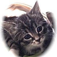 Adopt A Pet :: Crissy - Sioux Falls, SD