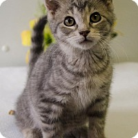 Adopt A Pet :: ALICE - Sandusky, OH
