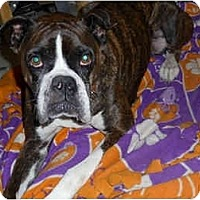 Adopt A Pet :: Sadie - Thomasville, GA