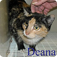 Adopt A Pet :: Deanna - Chesapeake, VA