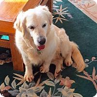 Adopt A Pet :: Tassie - Yorktown, VA