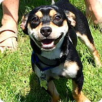 Adopt A Pet :: Roscoe - in Maine - kennebunkport, ME