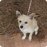 Adopt A Pet :: Lincoln - Atlanta, GA