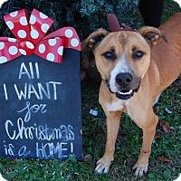 Adopt A Pet :: Marvin - Bishopville, SC
