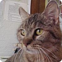 Adopt A Pet :: Kebi - Northfield, MN
