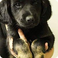 Adopt A Pet :: Clover - Charlestown, RI