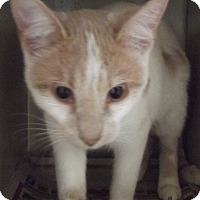 Adopt A Pet :: CHARLIE - Cheboygan, MI