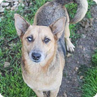 Adopt A Pet :: Mellie - Austin, TX