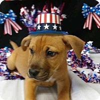 Adopt A Pet :: Bandit - North Brunswick, NJ