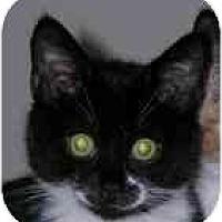 Adopt A Pet :: Kismet (& Caramels) - Portland, OR