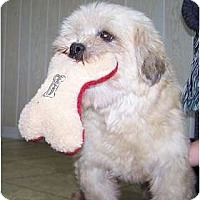 Adopt A Pet :: Molly - Adoption Pending!! - Antioch, IL