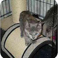 Adopt A Pet :: Sadie - Boston, MA