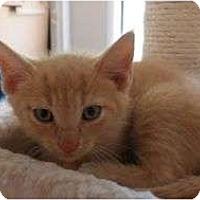 Adopt A Pet :: Buffy - Port Republic, MD