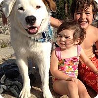 Adopt A Pet :: Buzz - Valley Springs, CA