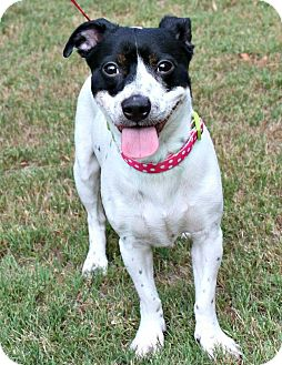Terrier (Unknown Type, Small) Mix Dog for adoption in Woodstock, Georgia - Oreo