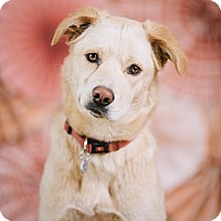Adopt A Pet :: Michelle - Portland, OR