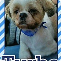 Adopt A Pet :: Turbo - Edwards AFB, CA