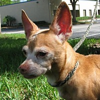 Adopt A Pet :: Chico - Orlando, FL