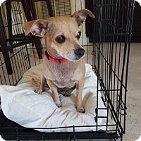 Adopt A Pet :: Pebbles - Deerfield Beach, FL
