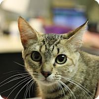 Adopt A Pet :: Chiggy - Covington, LA