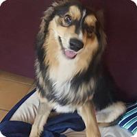 Adopt A Pet :: Keeper - Caledon, ON