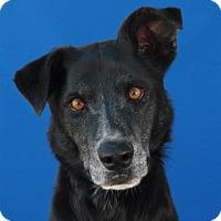Adopt A Pet :: Annie - Pagosa Springs, CO