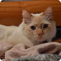 Adopt A Pet :: Andre - Franklin, NC