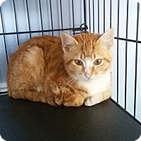 Adopt A Pet :: conan - McDonough, GA