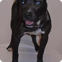 Adopt A Pet :: Bruno - Gary, IN