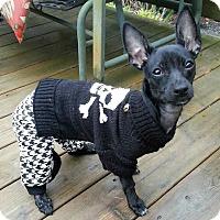 Adopt A Pet :: Wendy-fostering2adopt - Fredericksburg, VA