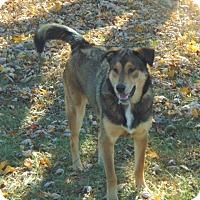 Adopt A Pet :: Lucy - Greeneville, TN