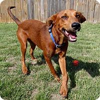 Adopt A Pet :: Red - PORTLAND, ME